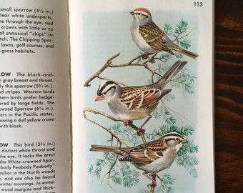 SALE! 1987 Full Color Golden Guide to Birds