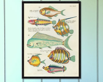 Tropical Fish Serious (No.6) Antique Reproduction Print  antique fish print coastal decor art home decor antique print tropical decor giclee