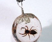 Large Real Spider Round Pendant Charm Dangle Taxidermy Halloween Decoration Arachnology Entomology Specimen A3