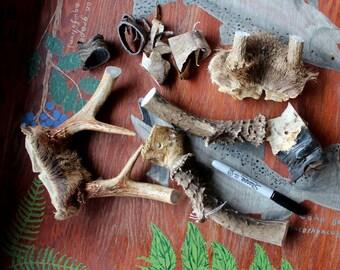 Lot of deer antler, skull, bone and goat horn pieces DESTASH