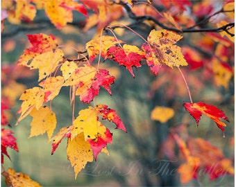 Fall Leaves Print, Nature Photography, Rustic Wall Decor, Autumn Photo, Fine Art Photograph, New England, Farmhouse Style, Yellow, Red