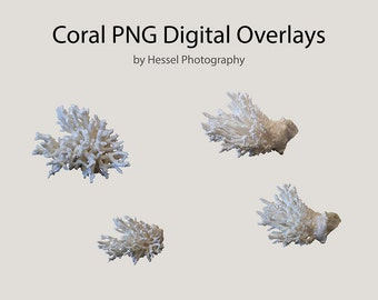 Coral PNG digital Overlay, photoshop overlays, clipart, Coral stock, digital coral, png overlays, photo overlay, PNG file, photoshop