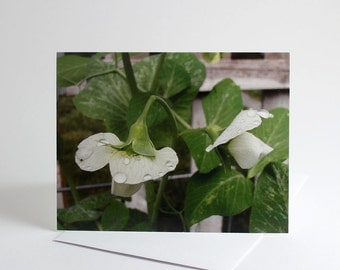 Set of 6 Garden Cards, Pea Blossoms, Greeting Cards, Garden Greeting Cards, Garden Art