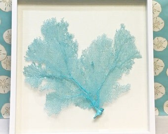 Beach Decor - Framed Natural Sea Fan - coral, coastal, nautical, embellished, seashells, starfish sealife