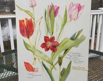 Tulipa  Botanical Study