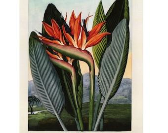 Bird of Paradise Flower Print Book Plate SALE Buy 3, get 1 Free