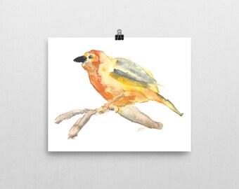 Yellow and Orange Bird, 8x10 print of original watercolor painting