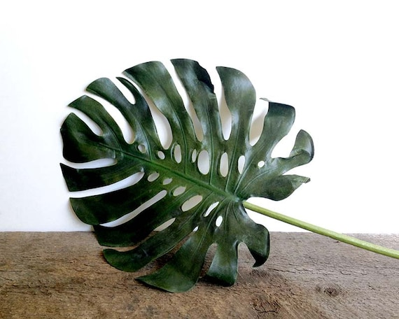Tropical monstera plant tropical leaf jungalow monstera for Plante monstera