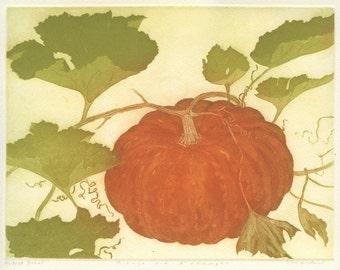Fine Art Etching of Cinderella Pumpkin heirloom variety Rouge Vif d'Etampes