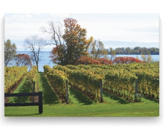 16x24 Gallery Wrap Canvas Photo Vineyard Rows - Fall Nature Photography – Serene Image
