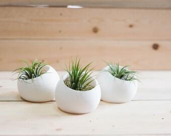 Mini Ava set of Three - Air Plant/ Mini Succulent Planters