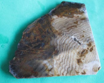 Agatized Petrified Wood Slab Brown Natural Free Form Stone