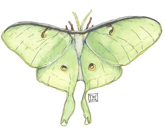 Luna Moth,  Watercolor Wildlife Illustration Print