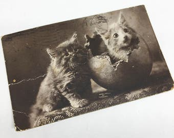 Vintage Cute Kitty Postcard Photographic Postcard, Sepia, by MT Sheahan, Boston MA, Cute Kitten Photograph, with Ben Franklin 1 cent stamp