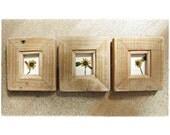 Little Sunflowers || Framed in Western Pine