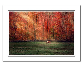 Shetland Pony Autumn Landscape Note Card with Envelope, Scenic Fall Foliage, Blank inside, Greeting Card, Red, Thank You Card