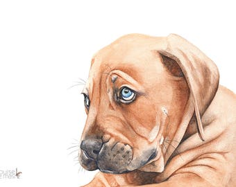French Bordeaux Puppy watercolour painting 5 by 7-  FB5815 print of puppy watercolour painting puppy print - nursery art. puppy watercolor