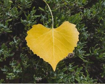 Heart Shaped Leaf Photo, Leaf Photograph, Heart Leaf Print, Abstract Leaf Photo, Nature Photography, Heart Print, Green Wall Art,
