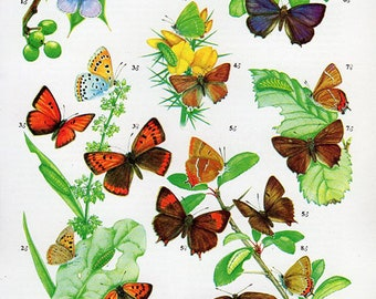 1960 Butterfly Print, plate 51 Vintage Antique Book Plate prints, 8 butterflies insects nature art illustrations