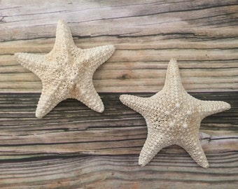 White Caribbean Starfish Wall Decor, Starfish Wall Hangings, Starfish Home Decor, Hanging Starfish, Starfish Wall decor, Beach Home Decor, 2