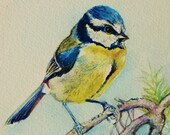 Blue Tit Painting - original watercolor