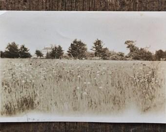 Original Vintage Photograph Field of Flowers
