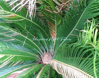 Palm Tropical Art DIGITAL Download Styled Stock Photography Foliage Rainforest Rustic Woodlands Nature Mockup COMMERCIAL LICENSE