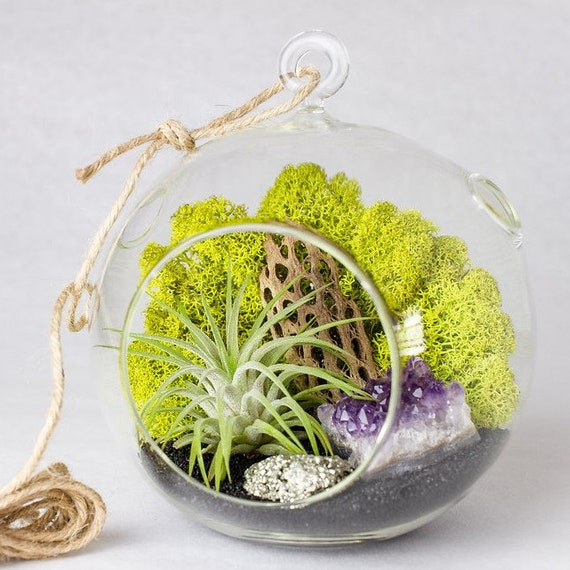 Glass Terrarium Kit Amethyst Cluster with Pyrite Air Plant || Medium Round Hanging