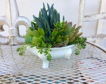 Live Succulents Planter Vintage Milkware Succulent Centerpiece Window Garden Vintage Pedestal Compote White Wedding Live Succulents