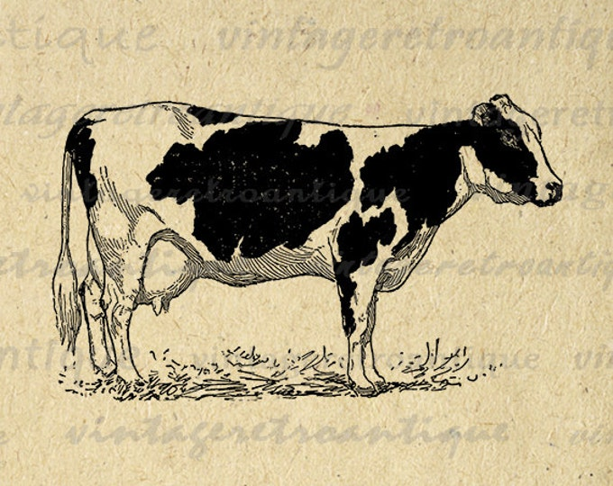 Printable Holstein Cow Digital Image Farm Animal Printable Cow Illustration Vintage Graphic Antique Clip Art Jpg Png Eps HQ 300dpi No.3104