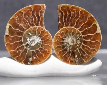 Ammonite Supply Fossil Pairs Loose Ammonite Slices for Earrings Jewelry Making Supply Polished Ammonite