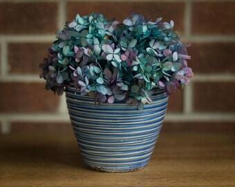 Blue Hydrangea Flowers, Preseved Hydrangea Bouquet,  PeeGee Hydrangeas, Dried Flowers, Blue Bi Color Hydrangeas, Preserved Blue Flowers