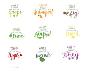Printable Pregnancy Week-By-Week Signs, Corresponding Fruits and Veggies, Fruit and Veggies Chart, PRINTABLE Signs