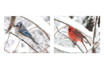 Bird Photograph - Set of 2 Bird Photographs - Cardinal - blue Jay - Winter Bird - Snowy Winter - Nature Art - Beautiful Bird - Bird Gallery