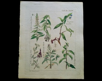 Botanical Print 1826, Original Hand Colored Engraving, Signed, Antique Birsh Dayflowers, Two-Coloured Dalea etc. Print