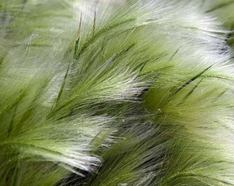 GR) PONY TAIL Grass~Seed!!~~~~~Animate Your Garden Today!