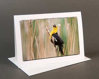 Blank photo notecard, Laughing Yellowhead