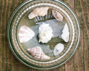 Vintage Seashell Paperweight with Magnifying Domed Top