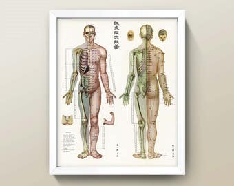 Acupuncture Chart • 8x10 Wall Art • High Quality Giclée Print