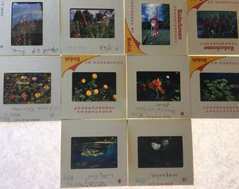 Set of 10 film flower slides
