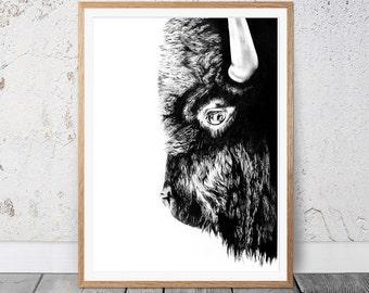 Bison animal art, animal sketch, buffalo drawing