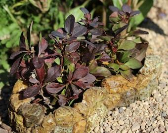 Fairy Garden  - Stone Flower Bed - Miniature