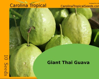 Giant Thailand Guava Seeds - 10 Seed Count