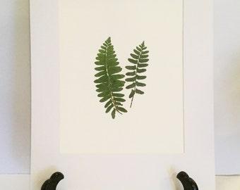 Real Pressed Fern Botanical Art Herbarium of Christmas Ferns 8x10 OR 11x14