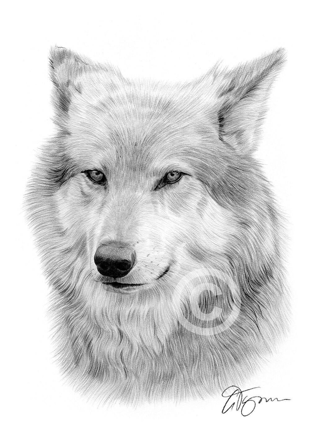 Ritratto di un lupo grigio opera formato a4 stampa di for Lupo disegno a matita