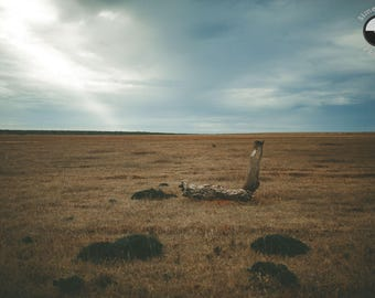 Plain landscape photography, Sagres Portugal, Old wood branch, Travel Photography
