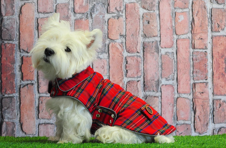 """Résultat de recherche d'images pour """"westie avec manteau ecossais pinterest"""""""