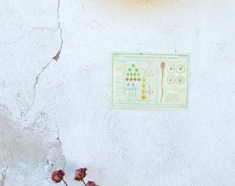 Vintage Teaching Board, Biology Chart, Old School Chart, Genetics Illustration, Educational Wall Hanging, Vintage Plastic Chart, Wall Print