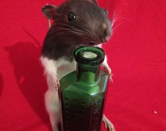 Rat Poison - Taxidermy - Brown and White Striped Rat with Antique Vintage Green Glass Poison Bottle
