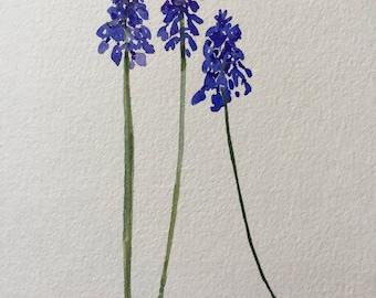 "An Original Watercolor, ""Muscari/Grape Hyacinth"" Note Card"